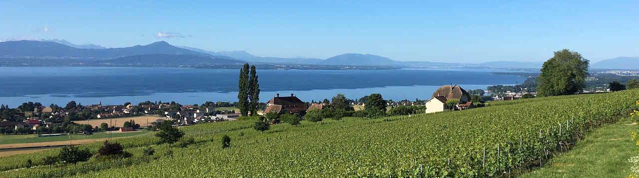 vineyard-1560967_128035